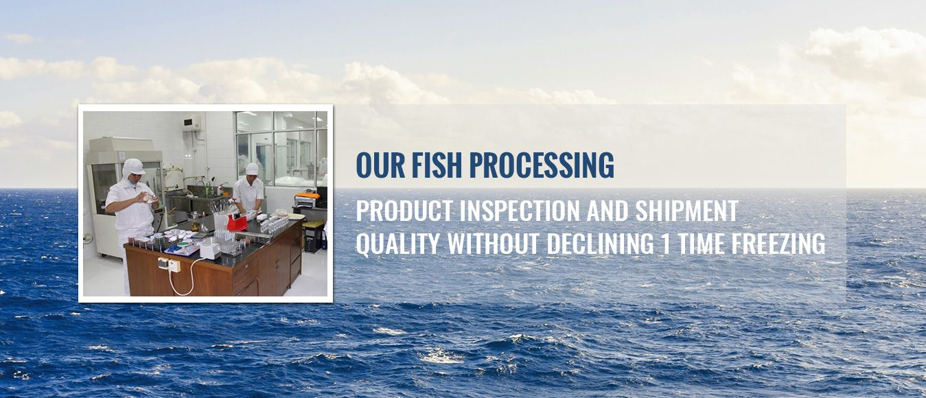 Fish processing - from inspection and shipment, quality without declining 1 time freezing